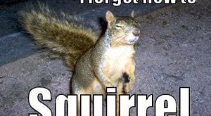 Cute squirrel pics