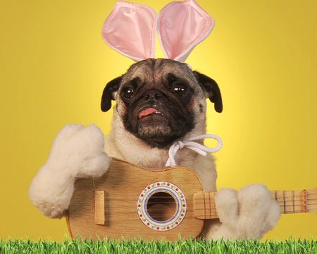 Easter Pooch Concert Ecard Famous Tune