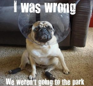 Funny Dog Quotes 6