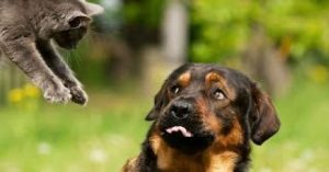 Funny Dog and Cat Videos Funny Cats Vs Dog Compilation