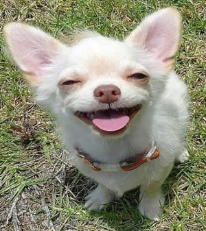 Funny Dog faces 17