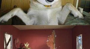 Really funny animals pics 58