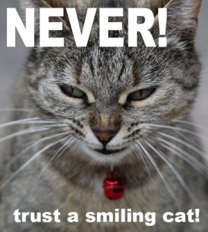 Never trust a smiling cat!