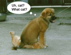 funny pic dog sits on cat