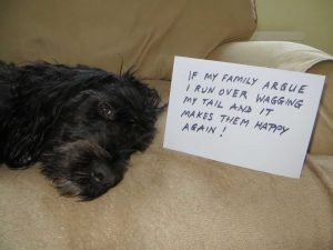 The bad Dog Cellection Dog Shaming 58