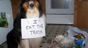 The bad Dog Cellection Dog Shaming 59