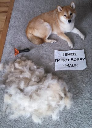 The bad Dog Cellection Dog Shaming 60