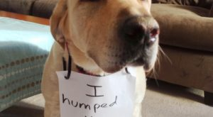 The bad Dog Cellection Dog Shaming 61