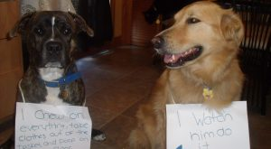 The bad Dog Cellection Dog Shaming 63