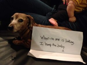 The bad Dog Cellection Dog Shaming 64