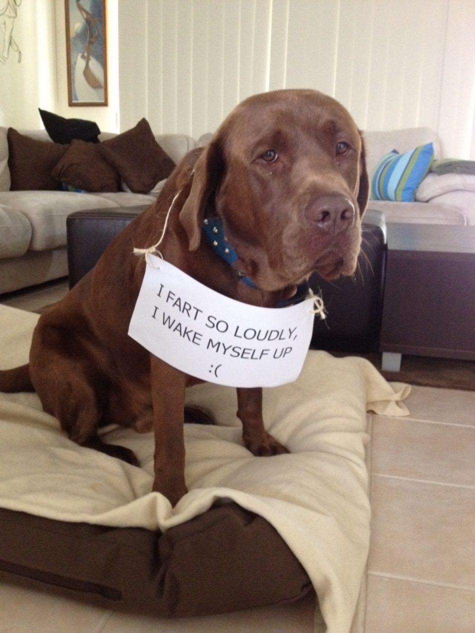 The bad Dog Cellection Dog Shaming 65