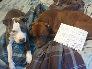 The bad Dog Cellection Dog Shaming 66
