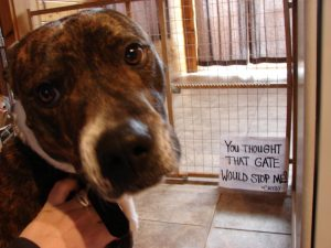 The bad Dog Cellection Dog Shaming 67