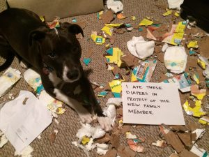 The bad Dog Cellection Dog Shaming 68