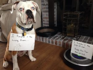 The bad Dog Cellection Dog Shaming 69