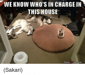 Funny Cats 16