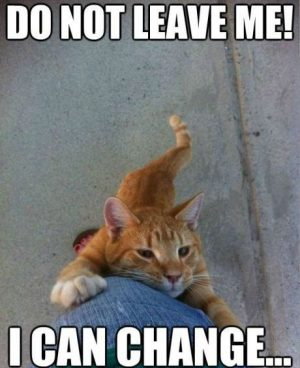 Funny Cats 22
