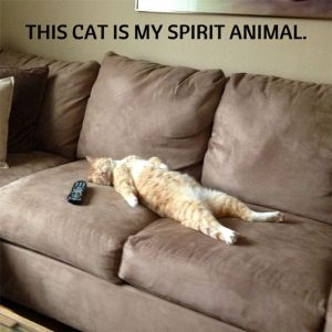 Funny Cats 30