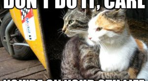 Funny Cats 60