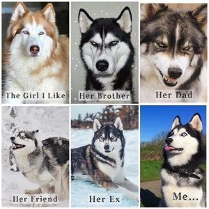 "50+ Funny Husky Memes That Will Keep You Laughing For Hours #husky explore Pinterest"">…"
