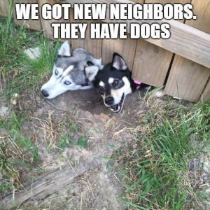 "50 Funny Husky Memes That Will Keep You Laughing For Hours #husky explore Pinterest"">…"