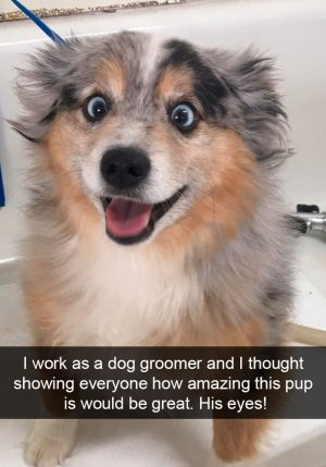 Funny Dogs 116