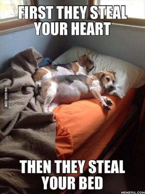 Funny Dogs 132