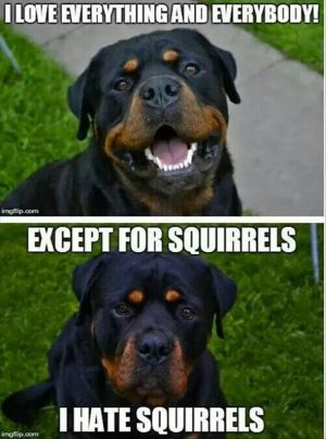 Funny Dogs 23