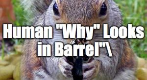 Squirrels with funny caption 11