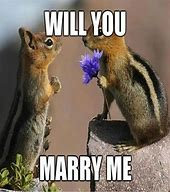 Squirrels with funny caption 12