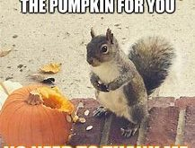 Squirrels with funny caption 18