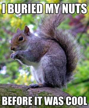 Squirrels with funny caption 33