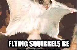Squirrels with funny caption 4