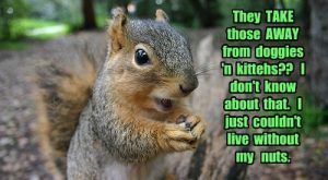 Squirrels with funny caption 6