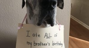 The bad Dog Cellection Dog Shaming 105