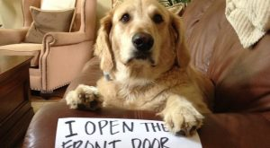 Bad Dog Shaming