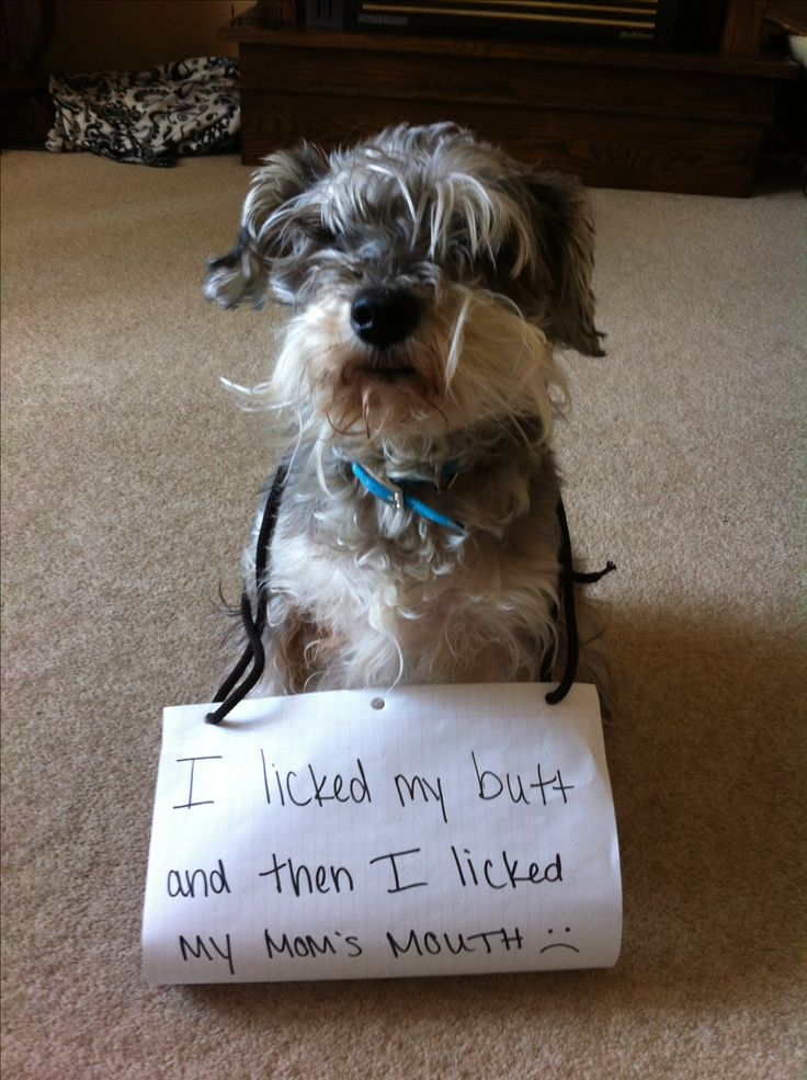 The bad Dog Cellection Dog Shaming 17