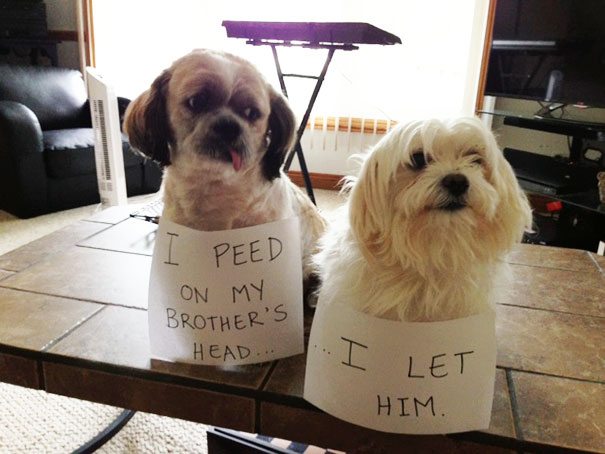 The bad Dog Cellection Dog Shaming 29