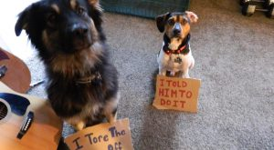 The bad Dog Cellection Dog Shaming 53
