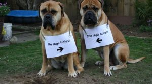 The bad Dog Cellection Dog Shaming 71