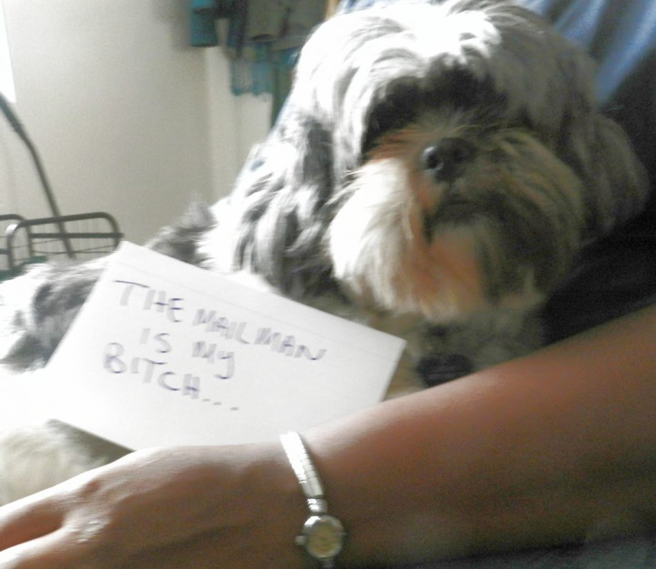 The bad Dog Cellection Dog Shaming 83