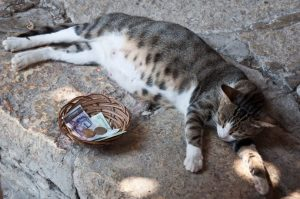 The pregnant cat Royal Palace The Quiet Nest Balchik Bulgaria
