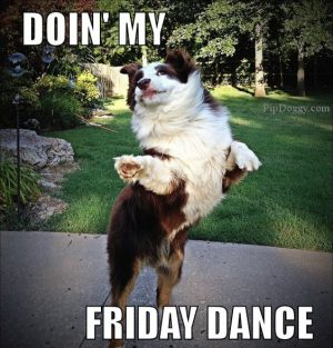funny dog memes friday dance