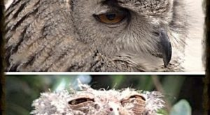 funny picture owls friday sunday1