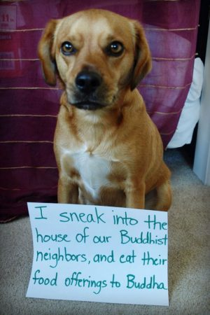 Funny Dog Shaming 1