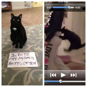 Funny Cat Shaming,  #Cat #Funny #Shaming