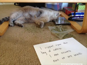 Cat Shaming At Its That He'll Remember tomorrow #funnycats, #funny, #everythingfunnyorg
